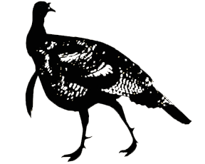 Long Beard Turkey Decal 6x6