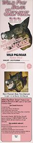Pig/boar Rotten Meat