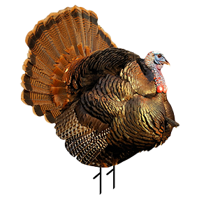 Punk Jake Turkey Decoy