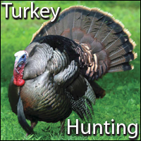 Turkey Hunting Catalog